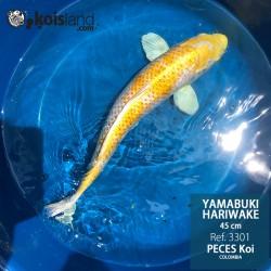 REF.3301 - Yamabuki Hariwake 45cm