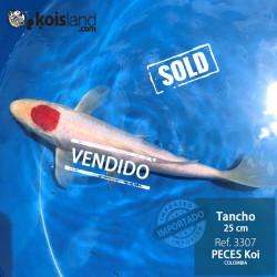 REF.3307 - Tancho 25cm