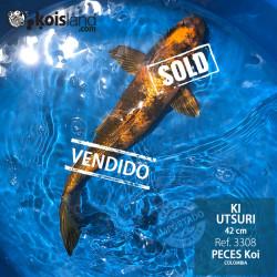 REF.3308 - Ki Utsuri 42cm