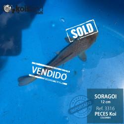 REF.3316 - Soragoi 12cm