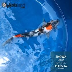 REF.3327 - Showa 28cm