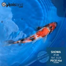 REF.3328 - Showa 21cm