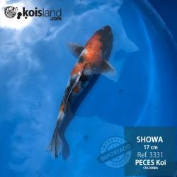 REF.3331 - Showa 17cm