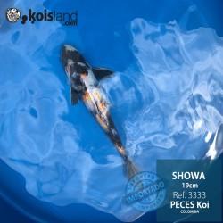 REF.3333 - Showa 19cm