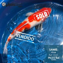 REF.3335 - Sanke 41cm