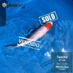 REF.3336 - Tancho 21cm