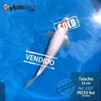 REF.3337 - Tancho 23cm