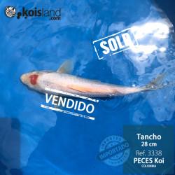 REF.3338 - Tancho 28cm