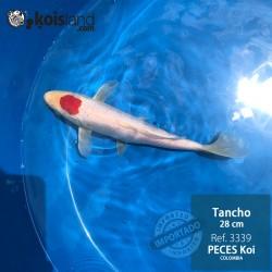 REF.3339 - Tancho 28cm