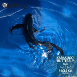 REF.3340 - Karasugoi Butterfly 20cm