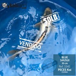 REF.3345 - Blue Shusui 30cm