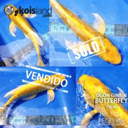 REF.1103 - Ogon Ginrin Butterfly 19cm