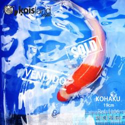 REF.1106 - Kohaku Doitsu 19cm