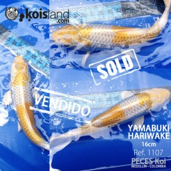 REF.1107 - Yamabuki Hariwake 20cm