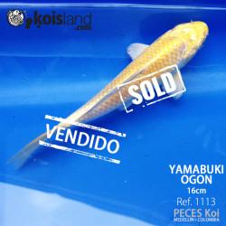REF.1113 - Yamabuki Ogon 16cm