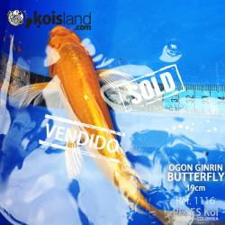REF.1116 - Ogon Ginrin Butterfly 19cm