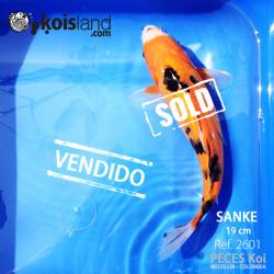 REF.2601 - Sanke 19cm