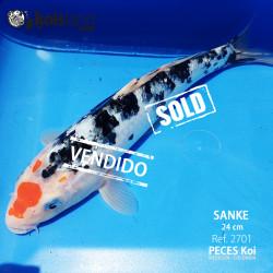 REF.2701 - Sanke 24cm