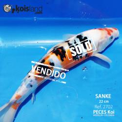 REF.2702 - Sanke DOITSU 22cm