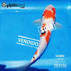 REF.2703 - Sanke 21cm (VIDEO)