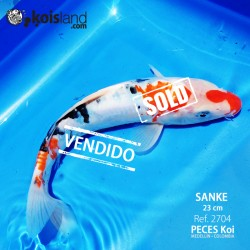 REF.2704 - Sanke 23cm (VIDEO)