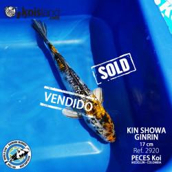 REF.2920 - Kin Showa Guinrin 17cm