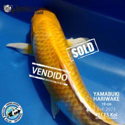 REF.2923 - Yamabuki Hariwake 19cm