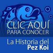 Conoce la Historia de los peces Koi