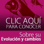 como evoluciona el pez koi al pasar los años?